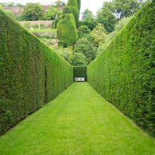 Зеленый живой забор